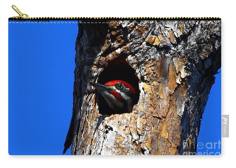 Pileated Woodpecker Carry-all Pouch featuring the photograph Peeking Out by Barbara Bowen
