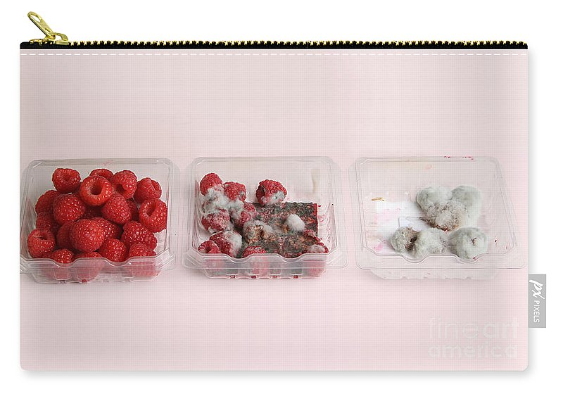 Still Life Carry-all Pouch featuring the photograph Raspberries Growing Mold by Photo Researchers, Inc.