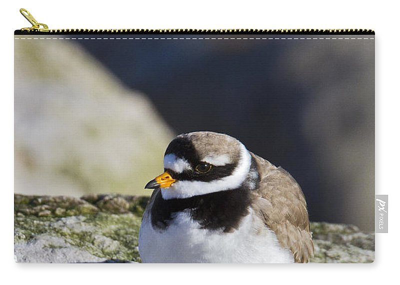 Ringed Plover Carry-all Pouch featuring the photograph Ringed Plover by Bob Kemp