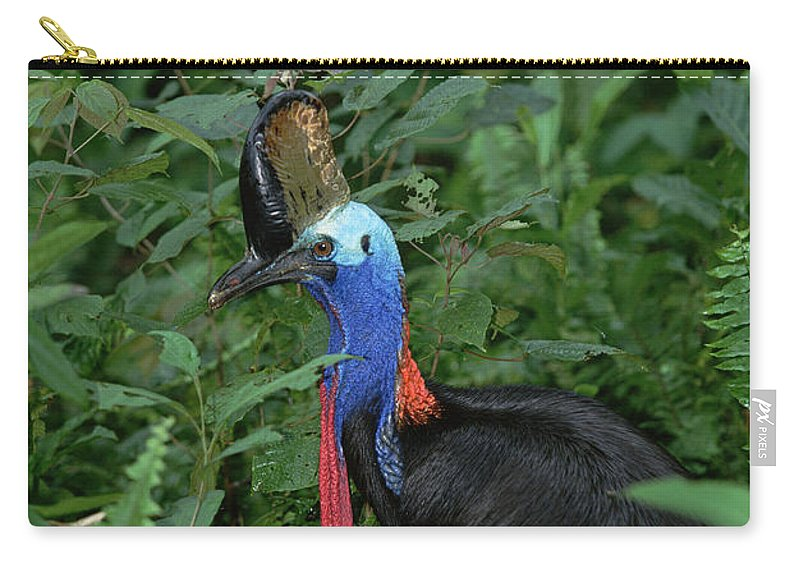 Mp Carry-all Pouch featuring the photograph Southern Cassowary Casuarius Casuarius by Konrad Wothe