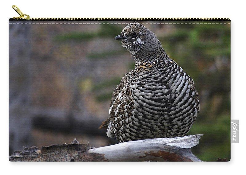 Alaska Carry-all Pouch featuring the photograph Spruce Grouse by Doug Lloyd