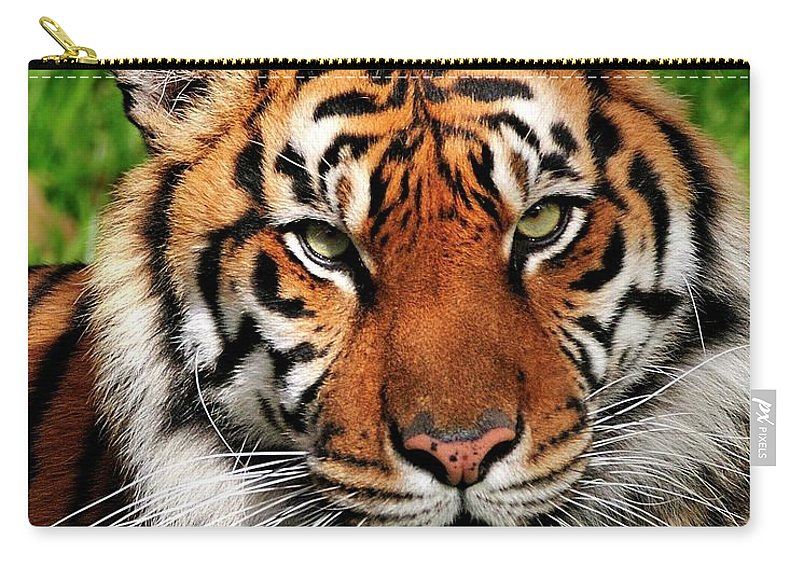 Sumatran Carry-all Pouch featuring the photograph Sumatran Tiger Portrait by Bill Dodsworth