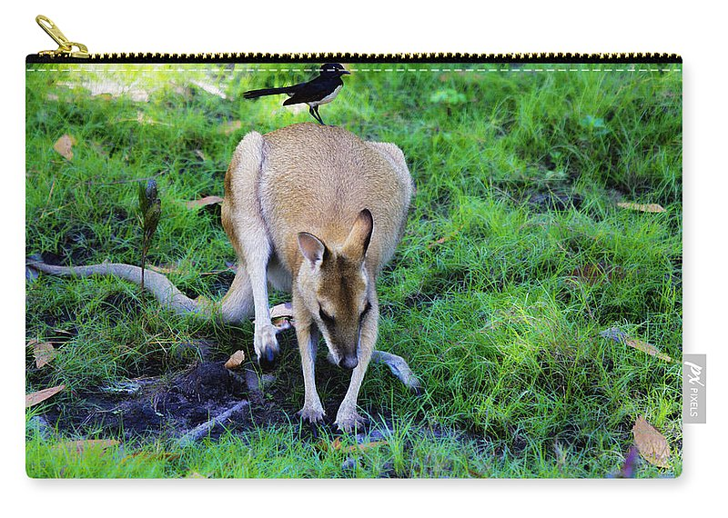 Willy Wagtail Carry-all Pouch featuring the photograph Symbiotic Relationship by Douglas Barnard