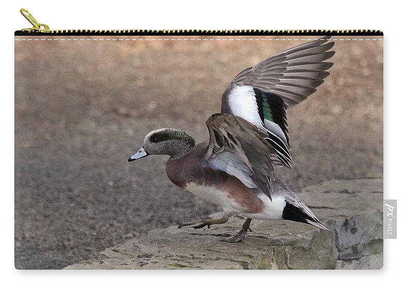 American Wigeon Carry-all Pouch featuring the photograph American Wigeon Waterfowl by Athena Mckinzie