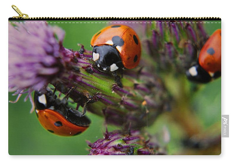 Yhun Suarez Carry-all Pouch featuring the photograph Threesome by Yhun Suarez