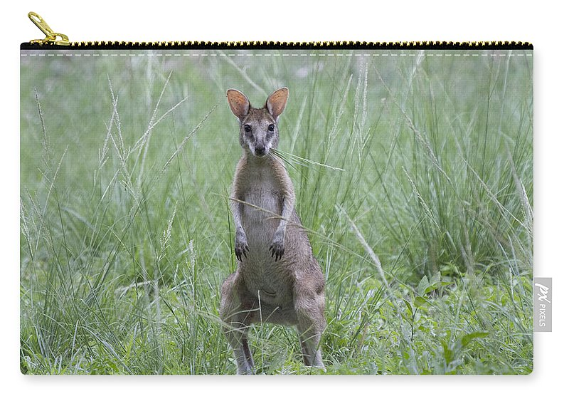Wallaby Carry-all Pouch featuring the photograph Wally by Douglas Barnard