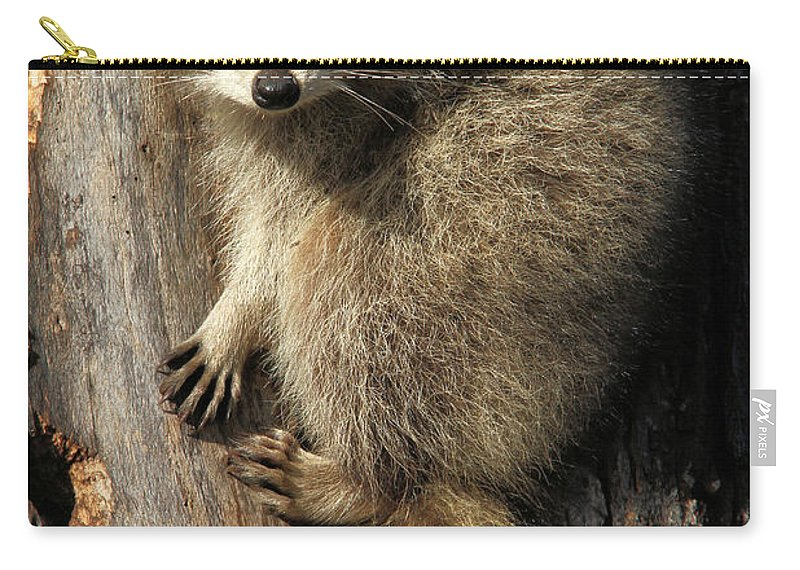 Raccoon Carry-all Pouch featuring the photograph Young Raccoon by Doris Potter