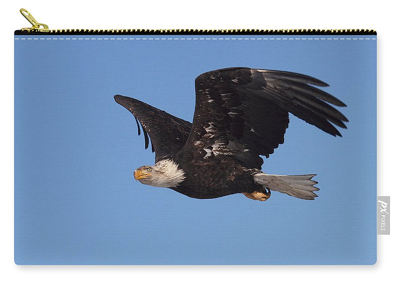 Doug Lloyd Carry-all Pouch featuring the photograph American Bald Eagle by Doug Lloyd