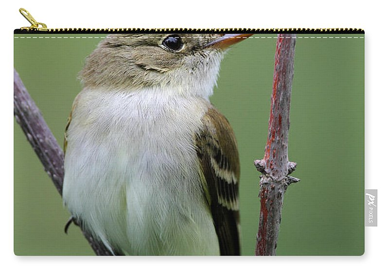 Doug Lloyd Carry-all Pouch featuring the photograph Alder Flycatcher by Doug Lloyd