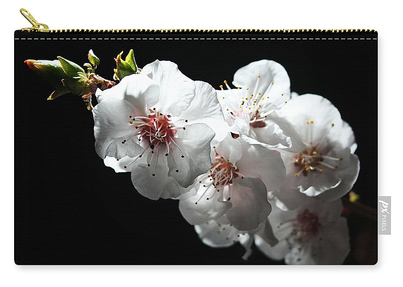 Apricot Carry-all Pouch featuring the photograph Apricot Flowers At Night by Masha Batkova