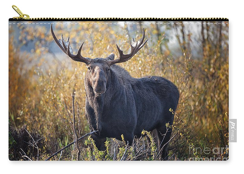2012 Carry-all Pouch featuring the photograph Bull Moose by Ronald Lutz