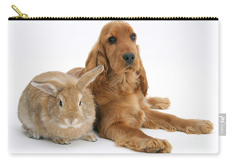 Animal Carry-all Pouch featuring the photograph Cocker Spaniel And Rabbit by Mark Taylor