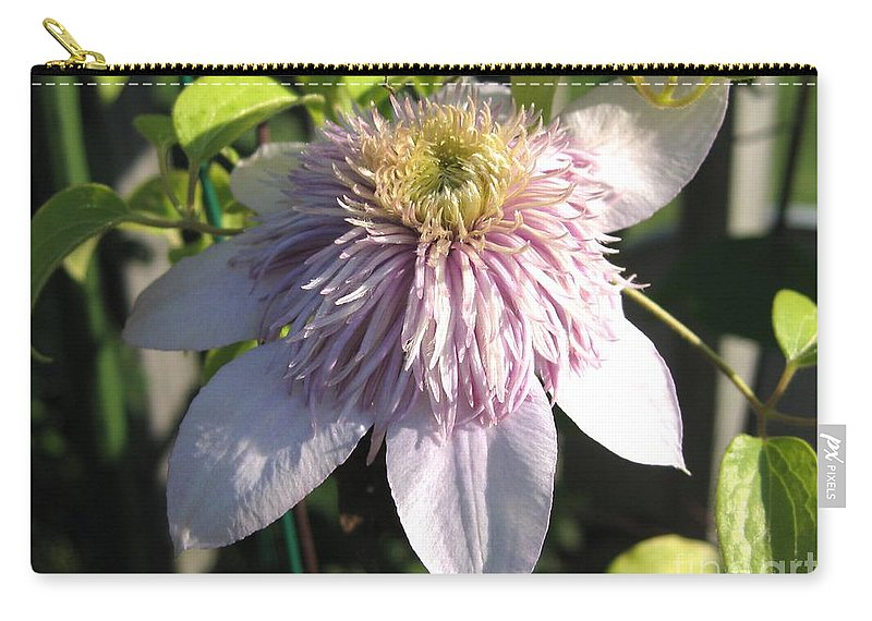 Double Clematis Carry-all Pouch featuring the photograph Double Clematis Named Empress by J McCombie