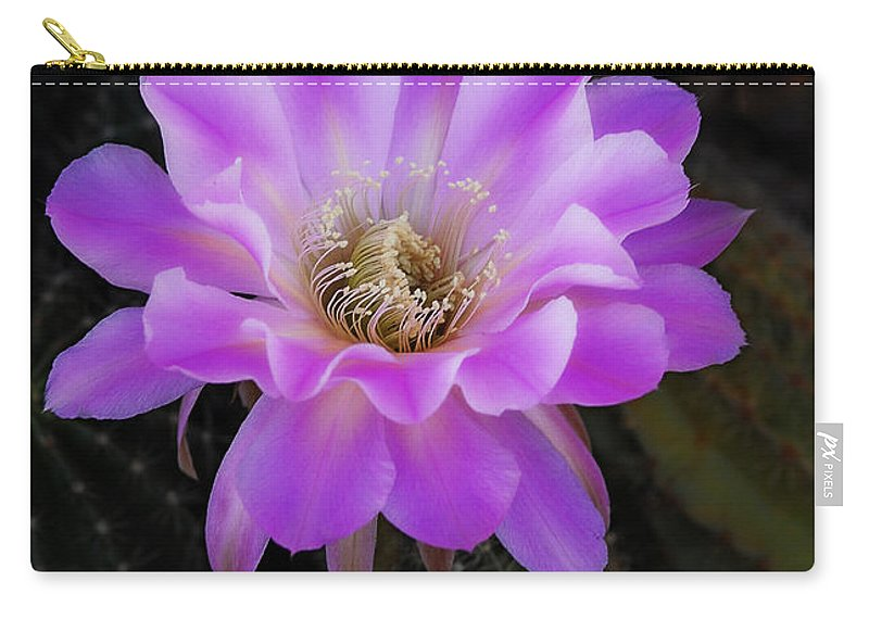 Echinopsis Aurea Carry-all Pouch featuring the photograph Echinopsis Aurea by Saija Lehtonen