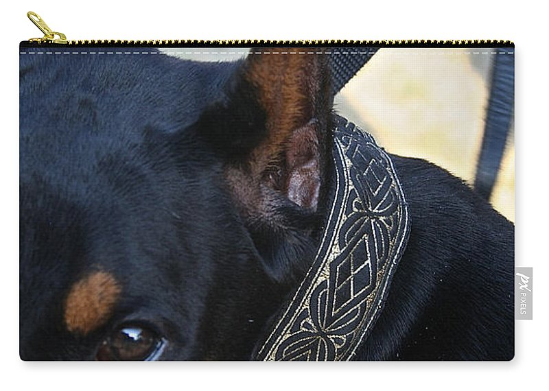 Dog Carry-all Pouch featuring the photograph Eye On You by Susan Herber