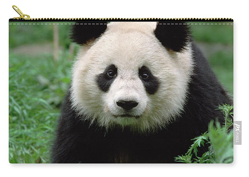 Mp Carry-all Pouch featuring the photograph Giant Panda Ailuropoda Melanoleuca by Gerry Ellis