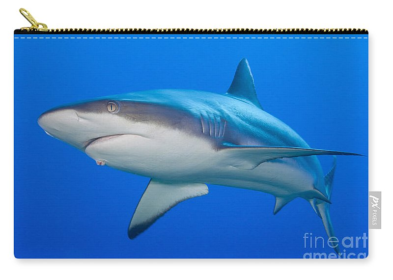 Underwater Carry-all Pouch featuring the photograph Gray Reef Shark, Kimbe Bay, Papua New by Steve Jones