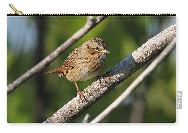 Doug Lloyd Carry-all Pouch featuring the photograph Lincolns Sparrow by Doug Lloyd