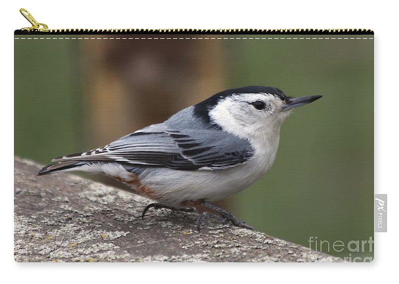 Nuthatch Carry-all Pouch featuring the photograph Nuthatch by Lori Tordsen