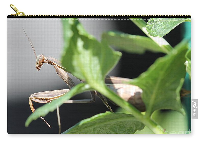 Praying Mantis Carry-all Pouch featuring the photograph Praying Mantis by J McCombie