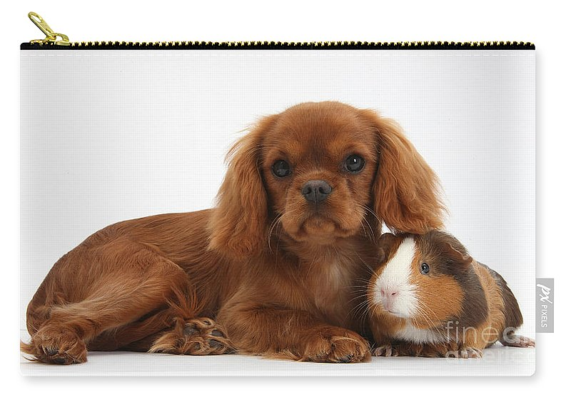 Nature Carry-all Pouch featuring the photograph Ruby Cavalier King Charles Spaniel Pup by Mark Taylor