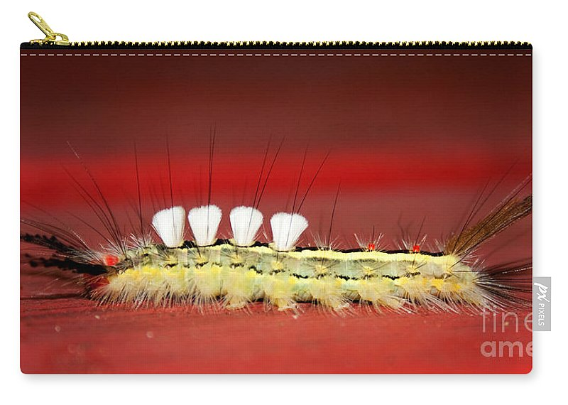 Caterpillar Carry-all Pouch featuring the photograph White Tussock Caterpillar by Barbara McMahon