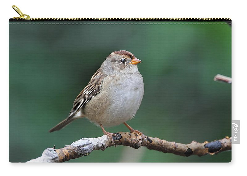 Doug Lloyd Carry-all Pouch featuring the photograph Whitecrowned Sparrow by Doug Lloyd