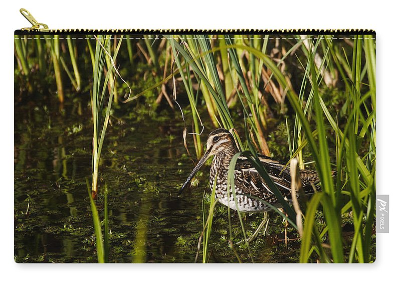 Alaska Carry-all Pouch featuring the photograph Wilsons Snipe by Doug Lloyd