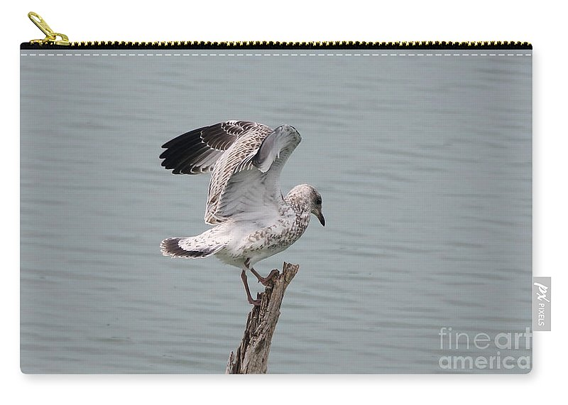 Seagull Carry-all Pouch featuring the photograph Wing Test by Lori Tordsen