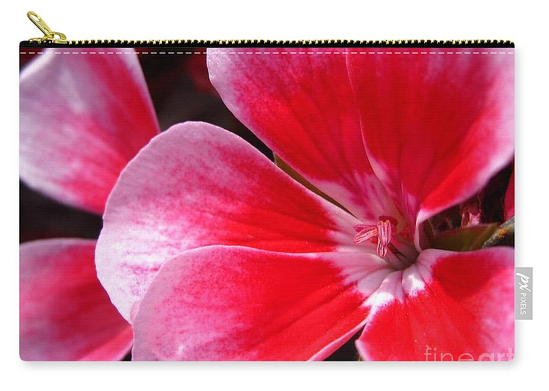 Zonal Geranium Carry-all Pouch featuring the photograph Zonal Geranium Named Candy Fantasy Kiss by J McCombie