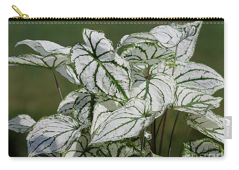 Caladium Carry-all Pouch featuring the photograph Caladium Named White Christmas by J McCombie
