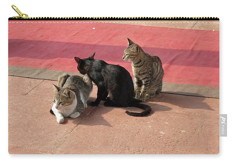 Cats Carry-all Pouch featuring the photograph 3 Cats Looking Pensive by Ashish Agarwal