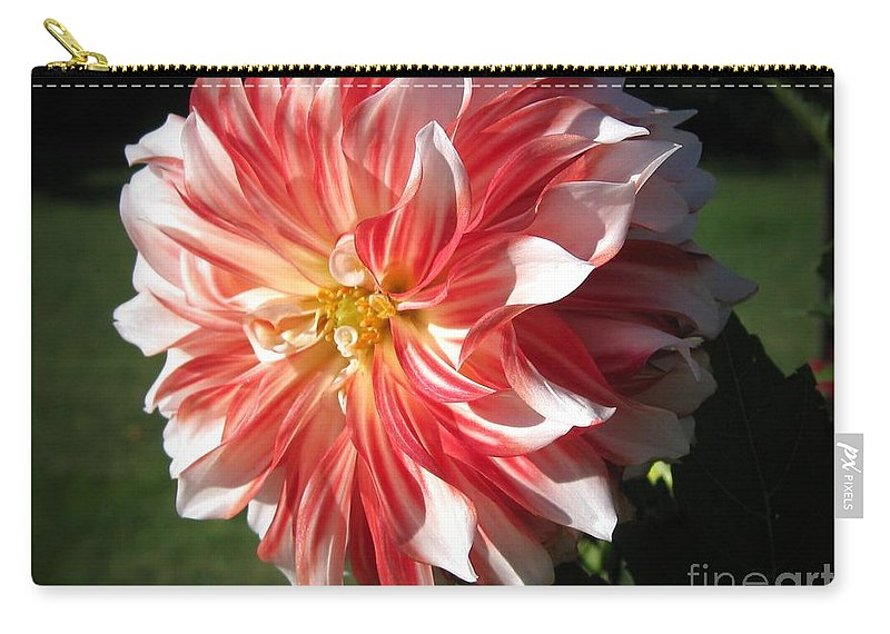 Mccombie Carry-all Pouch featuring the photograph Dahlia Named Myrtle's Brandy by J McCombie
