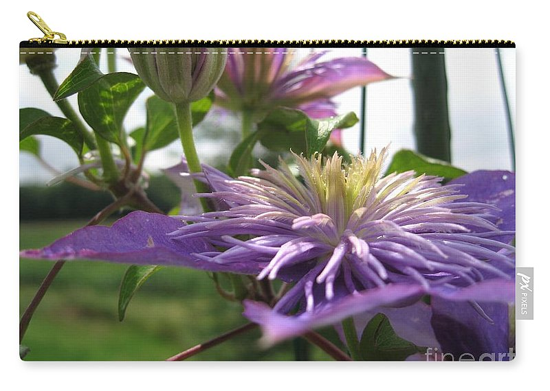 Double Clematis Carry-all Pouch featuring the photograph Double Clematis Named Crystal Fountain by J McCombie