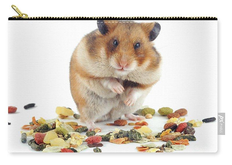 Hamster Bleeding – Wonderful Image Gallery