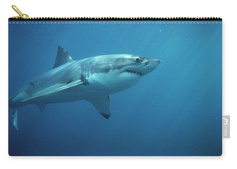 Mp Carry-all Pouch featuring the photograph Great White Shark Carcharodon by Mike Parry