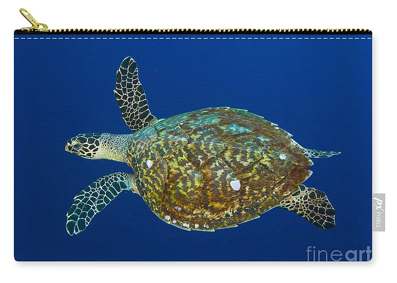 Cheloniidae Carry-all Pouch featuring the photograph Hawksbill Sea Turtle, Kimbe Bay, Papua by Steve Jones