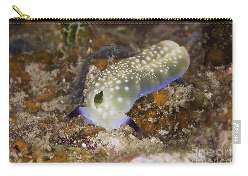 Plakobranchus Ocellatus Carry-all Pouch featuring the photograph Nudibranch Feeding On Algae, Papua New by Terry Moore