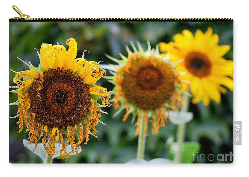 Sunflower Carry-all Pouch featuring the photograph 3 Sunflowers by Nancy Mueller