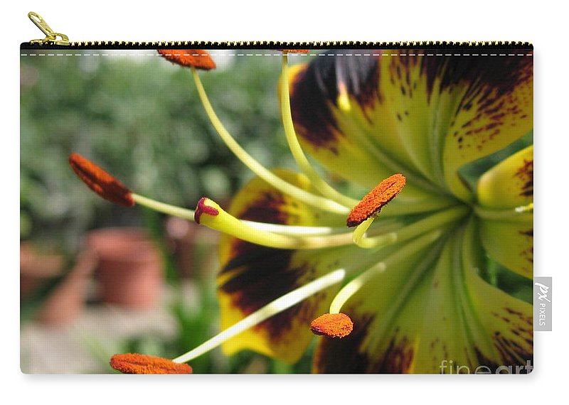Asiatic Lily Carry-all Pouch featuring the photograph Asiatic Lily Named Black-eyed Cindy by J McCombie