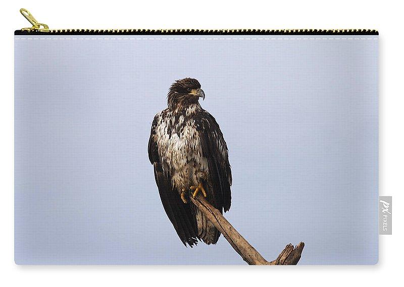 Doug Lloyd Carry-all Pouch featuring the photograph Juvenile Bald Eagle by Doug Lloyd