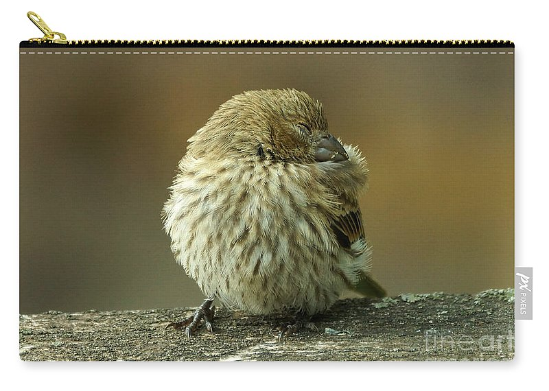 House Finch Carry-all Pouch featuring the photograph Nap Time by Lori Tordsen