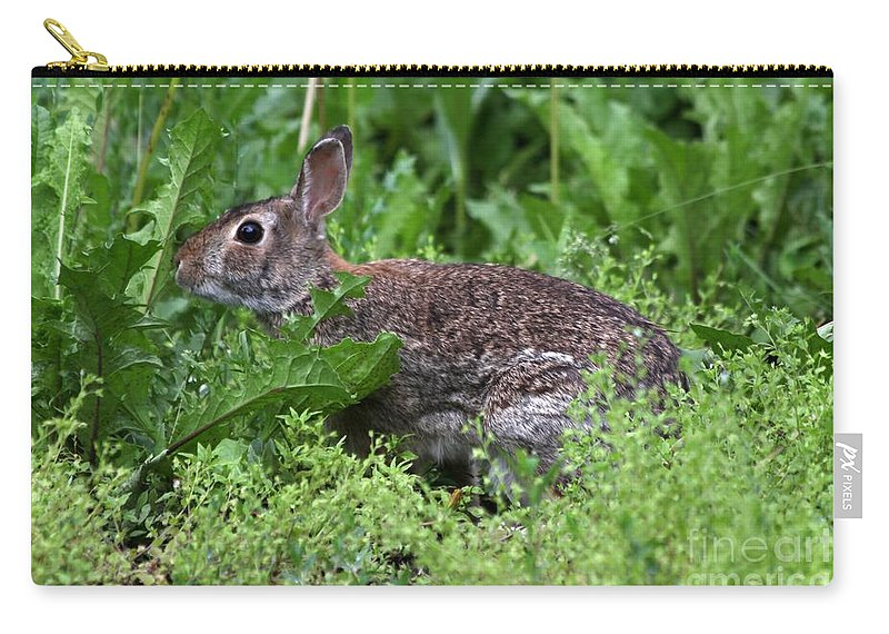 Wildlife Carry-all Pouch featuring the photograph Rabbit by Lori Tordsen