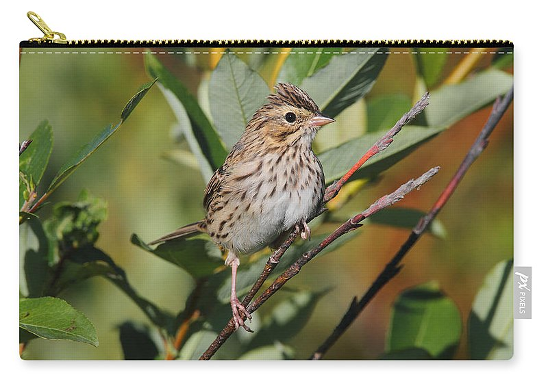 Doug Lloyd Carry-all Pouch featuring the photograph Savannah Sparrow by Doug Lloyd