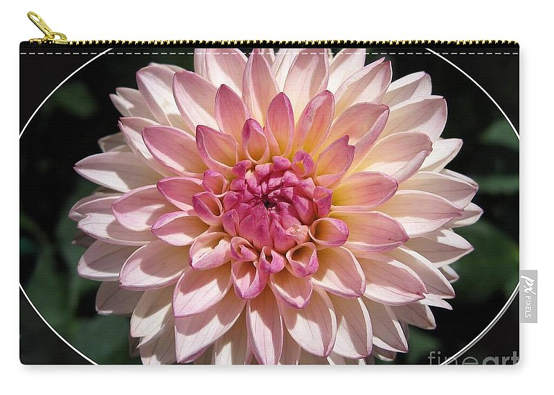 Mccombie Carry-all Pouch featuring the photograph Dahlia Named Valley Porcupine by J McCombie