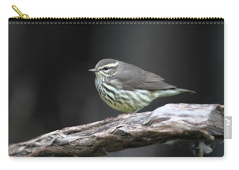 Doug Lloyd Carry-all Pouch featuring the photograph Northern Waterthrush by Doug Lloyd