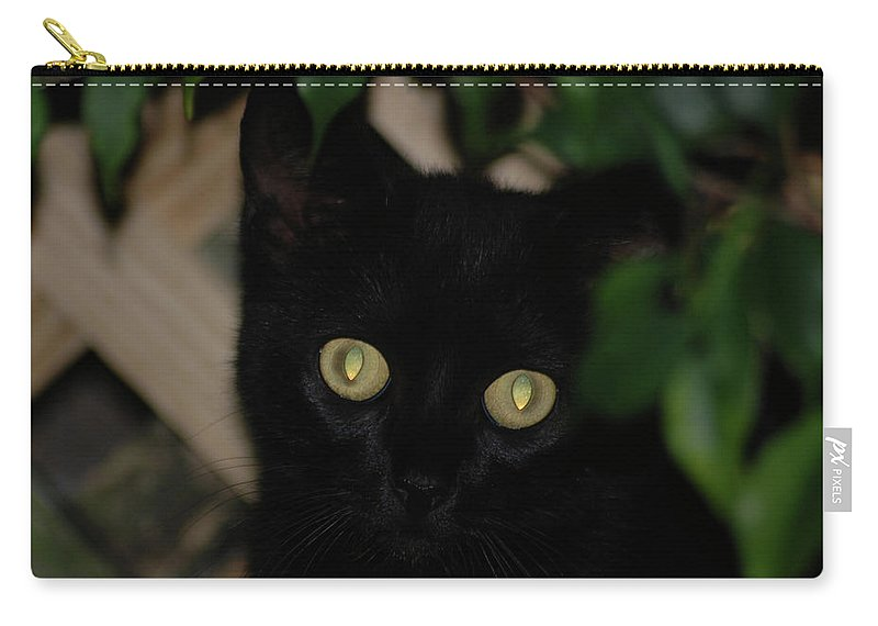 Black Cat Carry-all Pouch featuring the photograph 5- Transfixed by Joseph Keane
