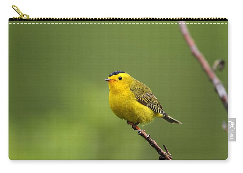 Doug Lloyd Carry-all Pouch featuring the photograph Wilsons Warbler by Doug Lloyd
