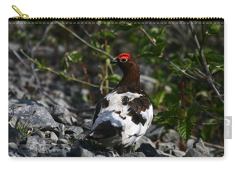 Alaska Carry-all Pouch featuring the photograph Willow Ptarmigan by Doug Lloyd