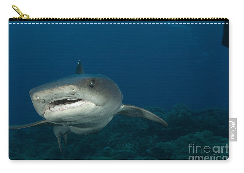 Kimbe Bay Carry-all Pouch featuring the photograph Whitetip Reef Shark, Kimbe Bay, Papua by Steve Jones